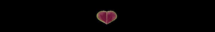 Herz Bilder