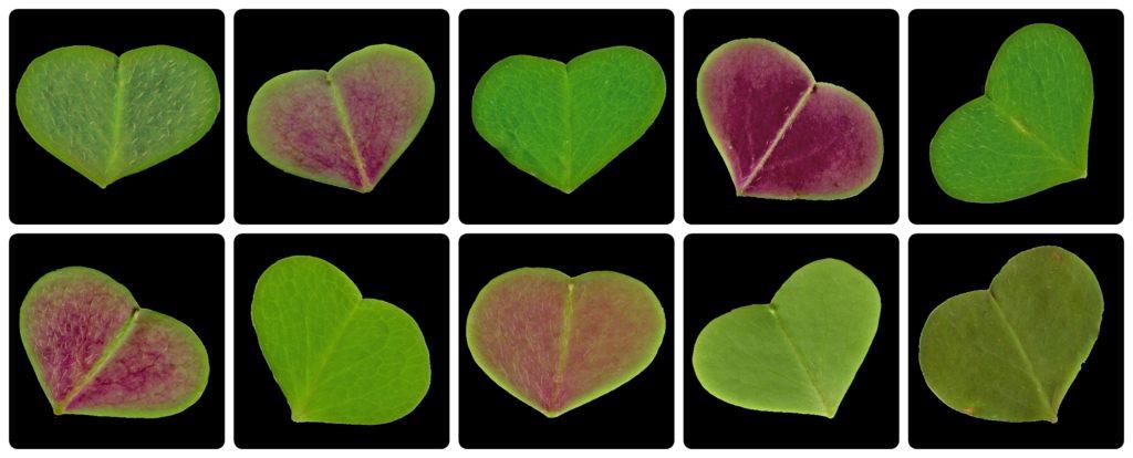 Herzbilder kopieren